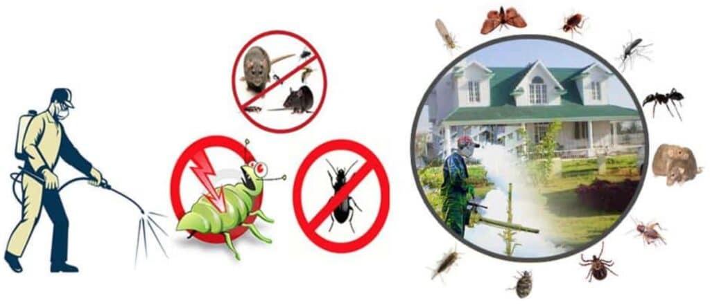 pest control zadksa 1024x441 - شركة مكافحة حشرات بالرياض - رش مبيدات الحشرات المنزلية